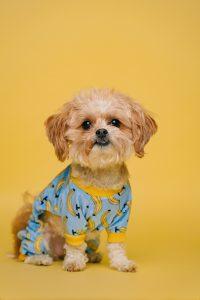 A cute puppy wearing pajamas.