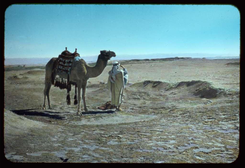 Camel and bedouin in dessert